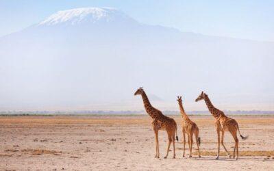 2 Days, 1 Overnight, African Wildlife safari to Kenya's Amboseli National park