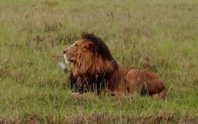 5 Days Lake Nakuru, Lake Naivasha and Masai Mara  Kenya Safari